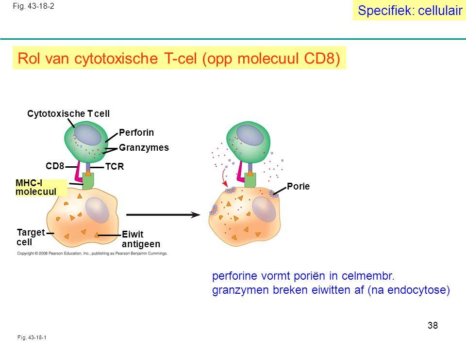 Rol van cytotoxische T-cel (opp molecuul CD8)