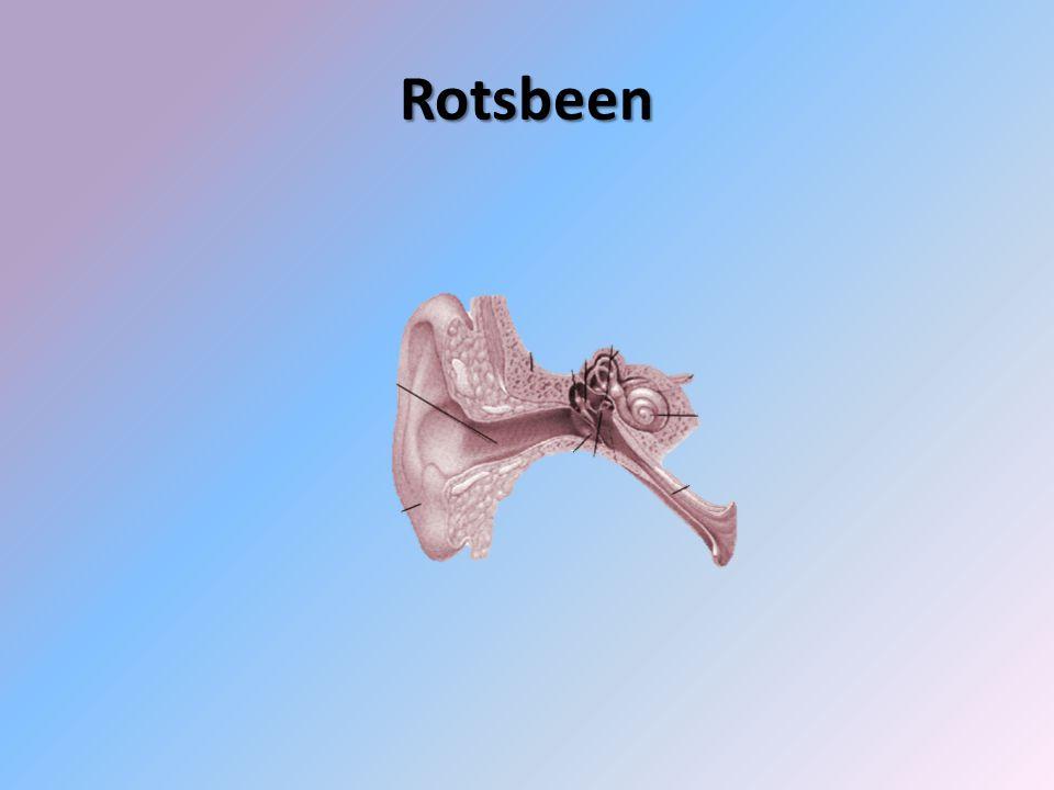 Rotsbeen
