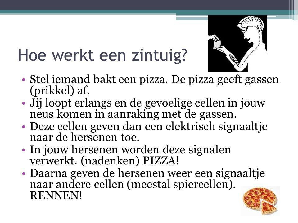 Hoe werkt een zintuig Stel iemand bakt een pizza. De pizza geeft gassen (prikkel) af.