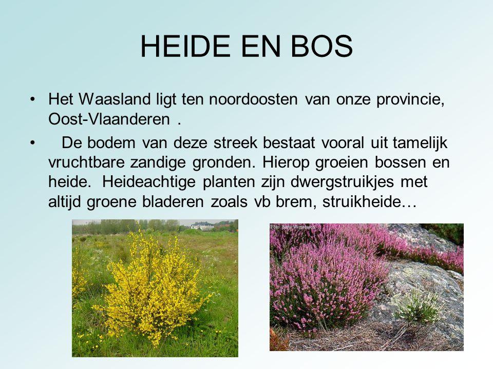 HEIDE EN BOS Het Waasland ligt ten noordoosten van onze provincie, Oost-Vlaanderen .