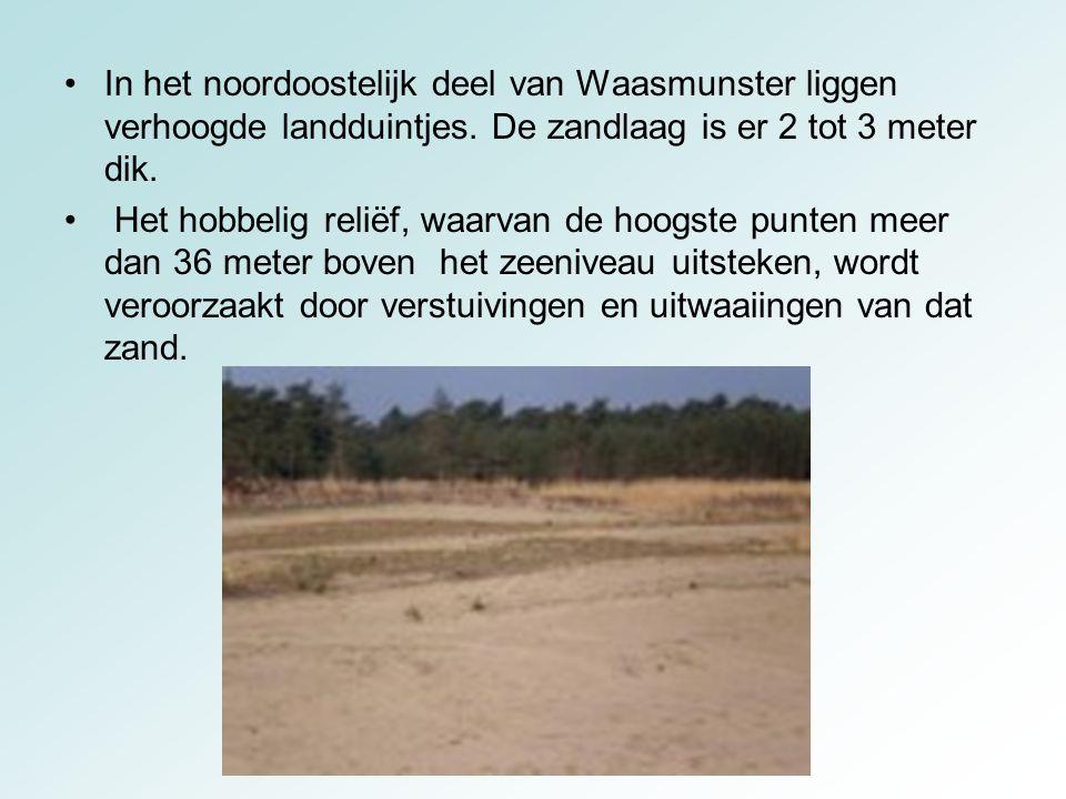 In het noordoostelijk deel van Waasmunster liggen verhoogde landduintjes. De zandlaag is er 2 tot 3 meter dik.