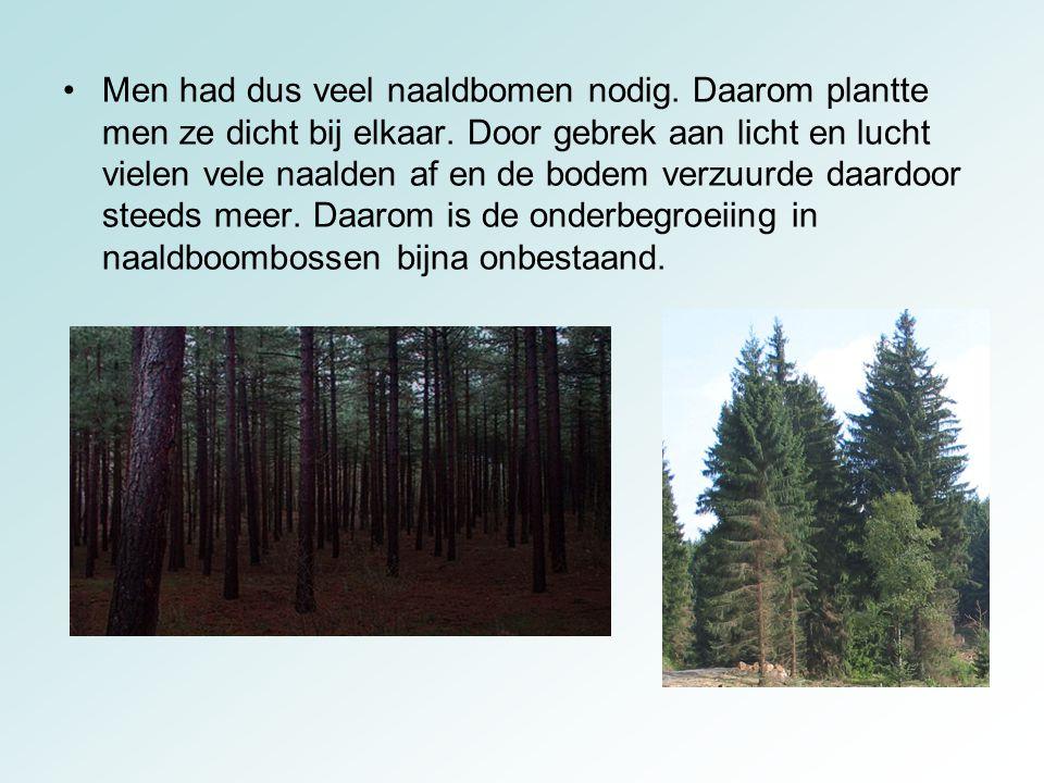 Men had dus veel naaldbomen nodig
