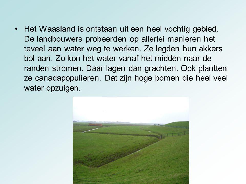 Het Waasland is ontstaan uit een heel vochtig gebied
