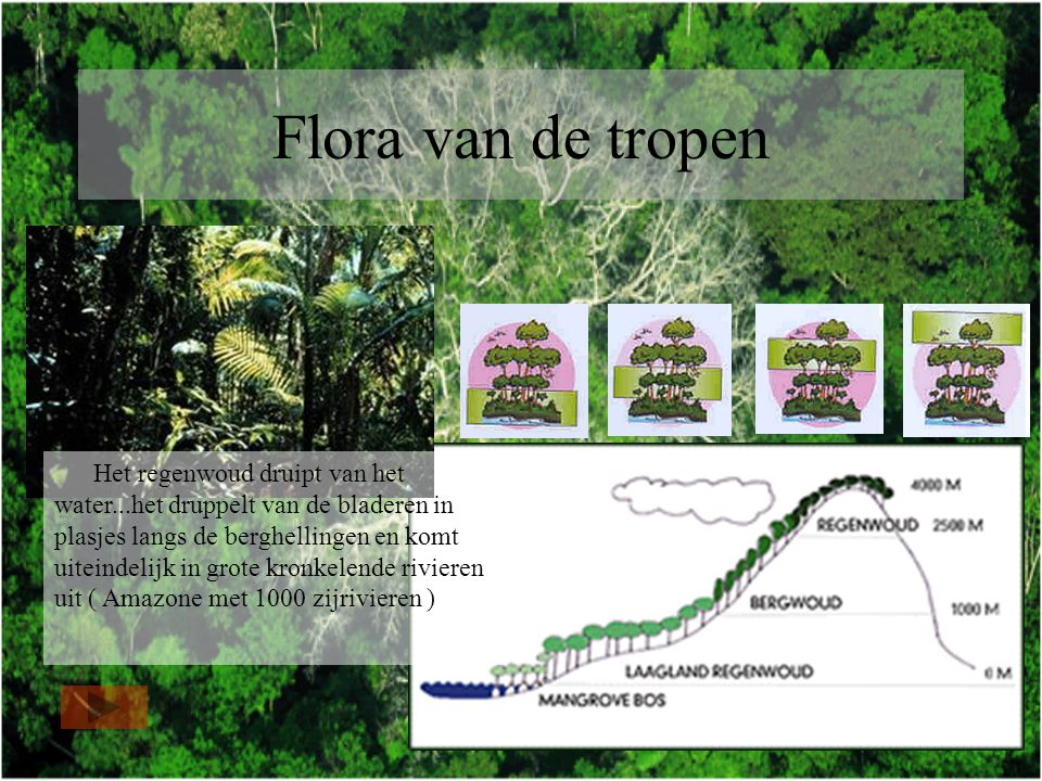 Flora van de tropen