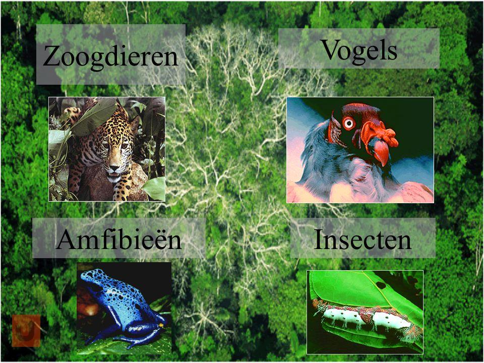Zoogdieren Vogels Amfibieën Insecten