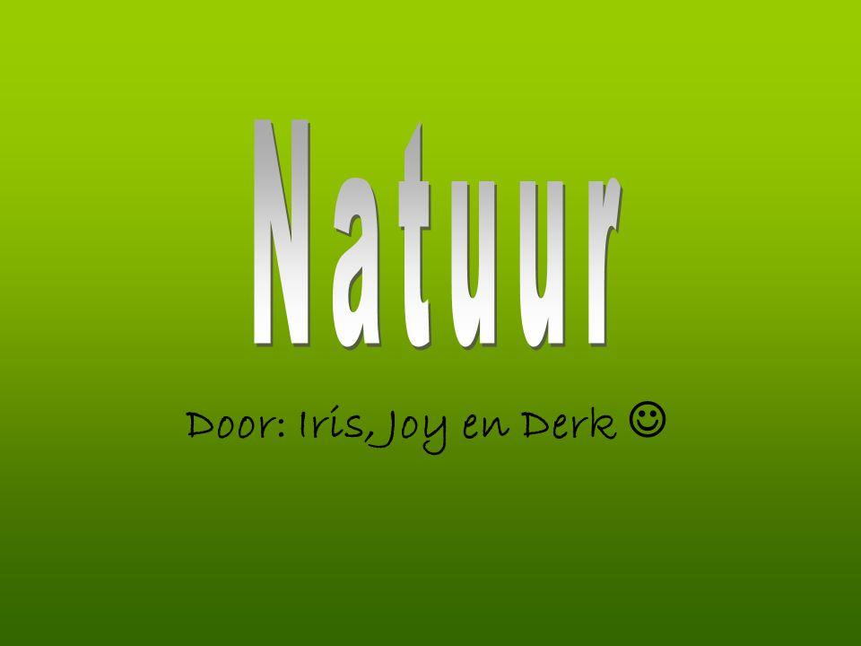 Natuur Door: Iris, Joy en Derk 
