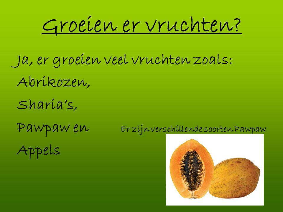 Groeien er vruchten Ja, er groeien veel vruchten zoals: Abrikozen,