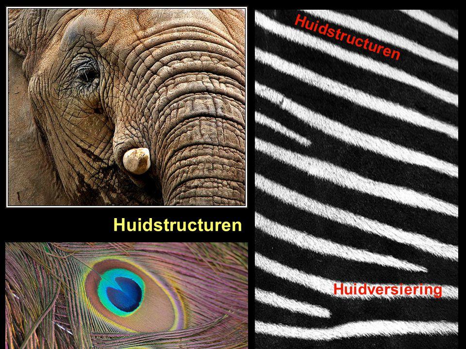 Huidstructuren Huidstructuren Huidversiering
