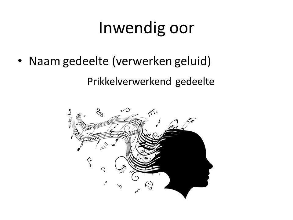 Inwendig oor Naam gedeelte (verwerken geluid)
