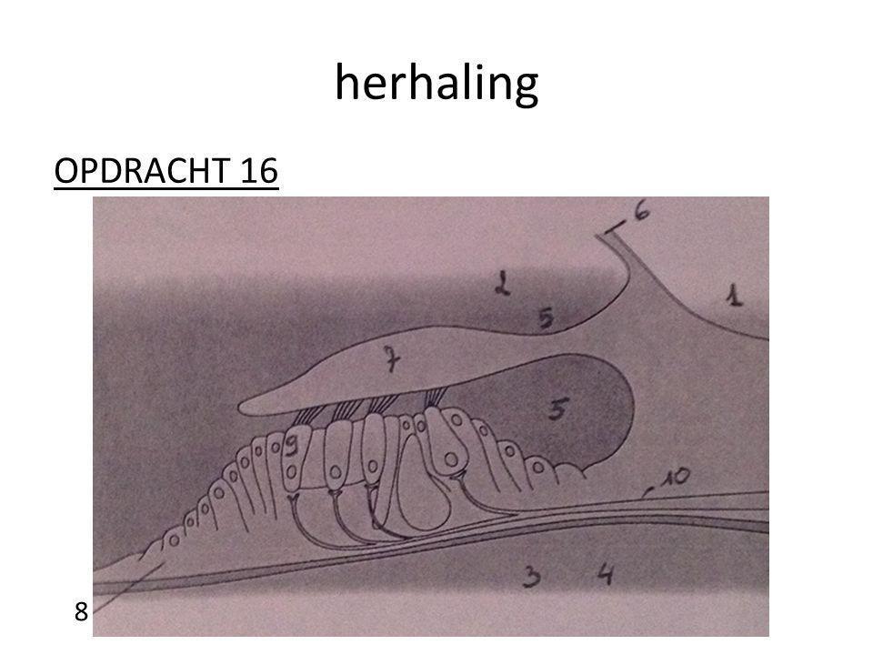 herhaling OPDRACHT 16 8