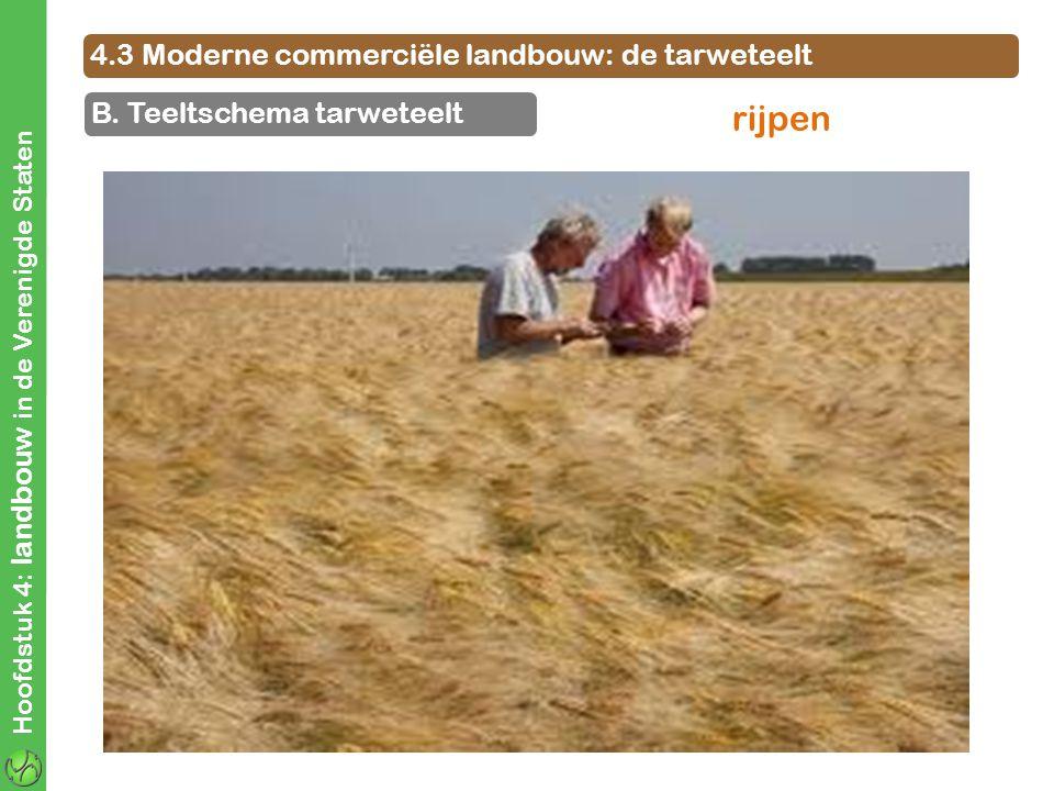 rijpen 4.3 Moderne commerciële landbouw: de tarweteelt