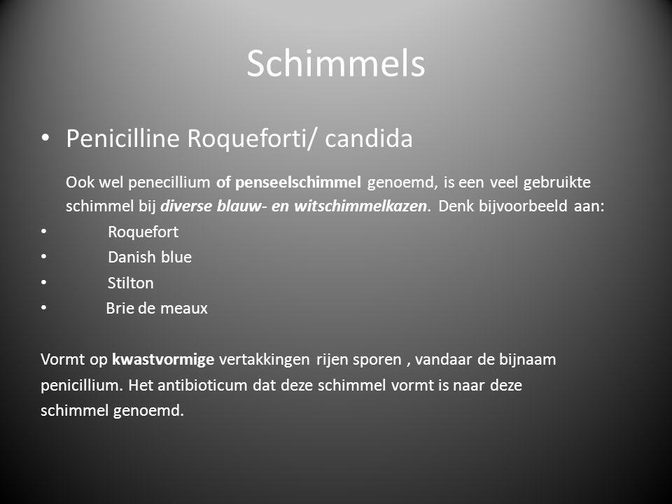 Schimmels Penicilline Roqueforti/ candida