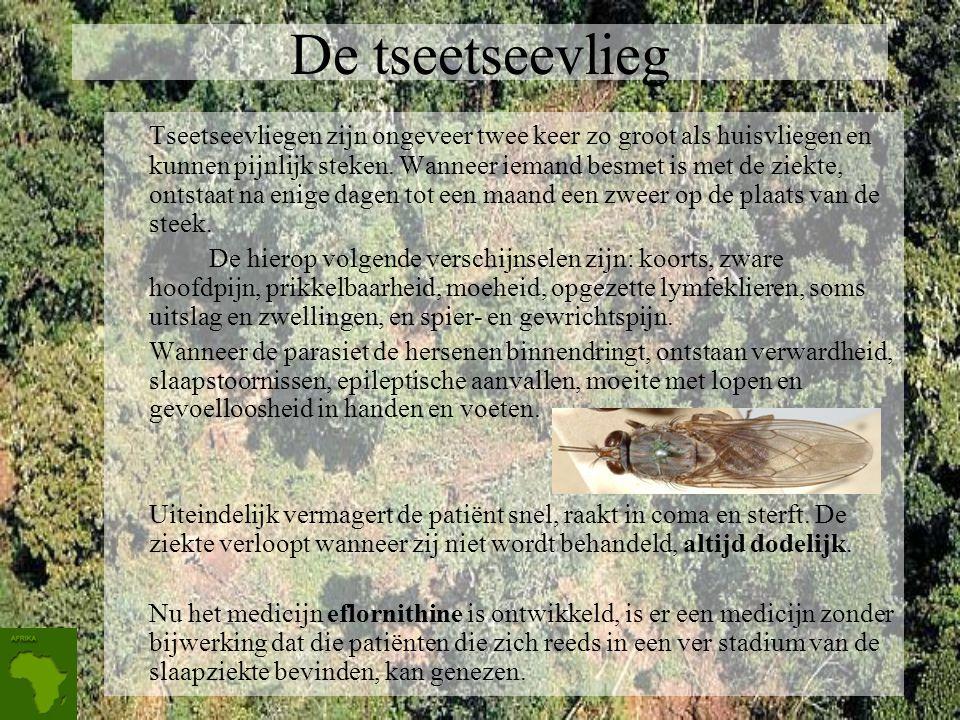 De tseetseevlieg