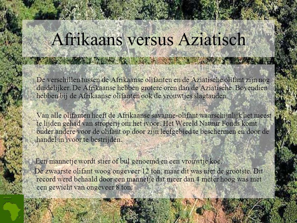 Afrikaans versus Aziatisch
