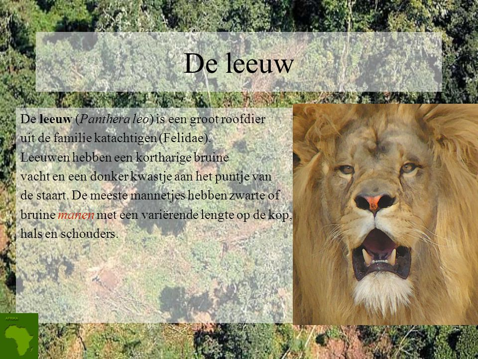 De leeuw De leeuw (Panthera leo) is een groot roofdier