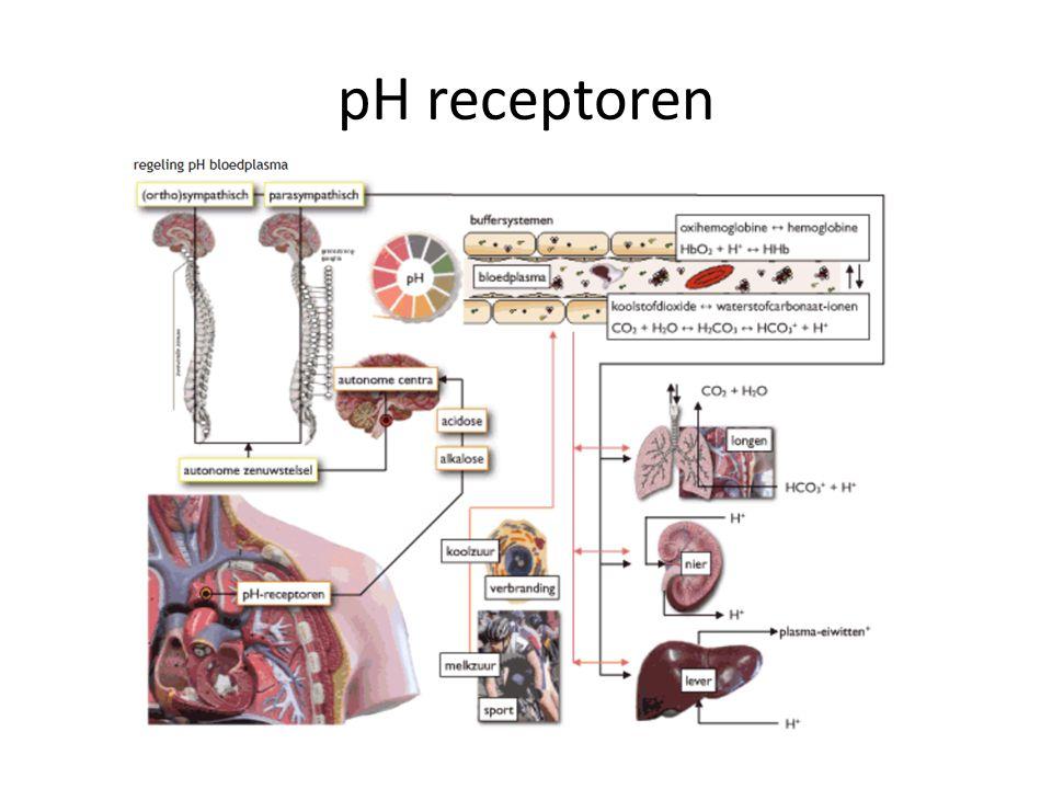 pH receptoren