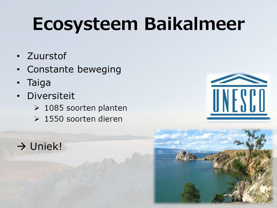 Ecosysteem Baikalmeer