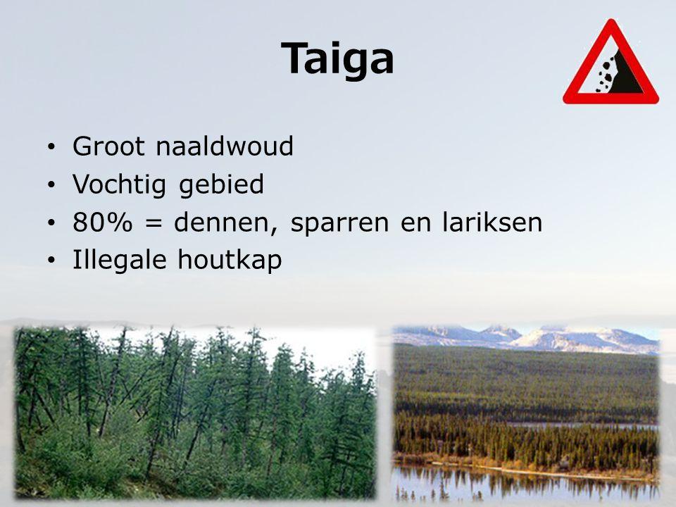 Taiga Groot naaldwoud Vochtig gebied 80% = dennen, sparren en lariksen