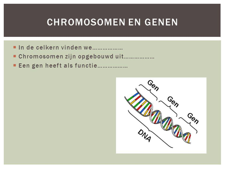 Chromosomen en genen In de celkern vinden we………………
