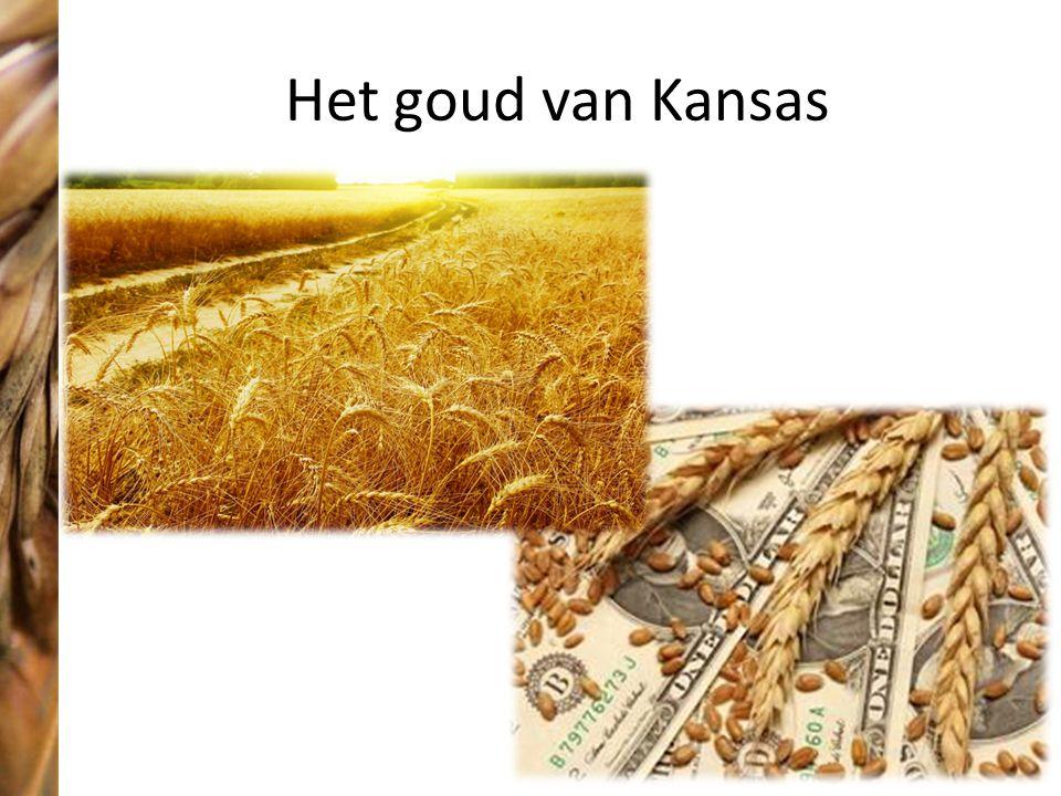 Het goud van Kansas