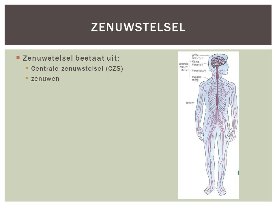 zenuwstelsel Zenuwstelsel bestaat uit: Centrale zenuwstelsel (CZS)