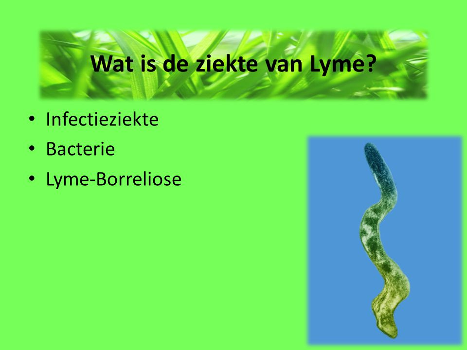 Wat is de ziekte van Lyme