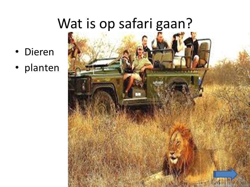 Wat is op safari gaan Dieren planten