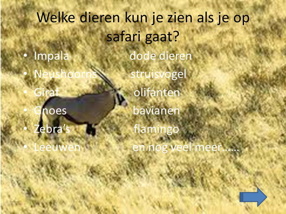 Welke dieren kun je zien als je op safari gaat