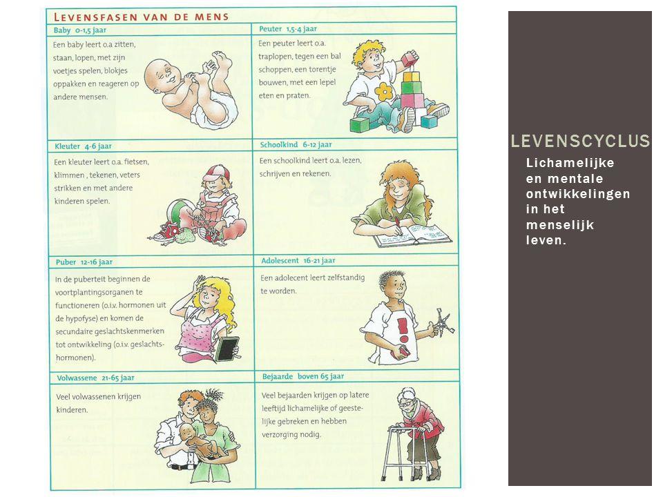 levenscyclus Lichamelijke en mentale ontwikkelingen in het menselijk leven.