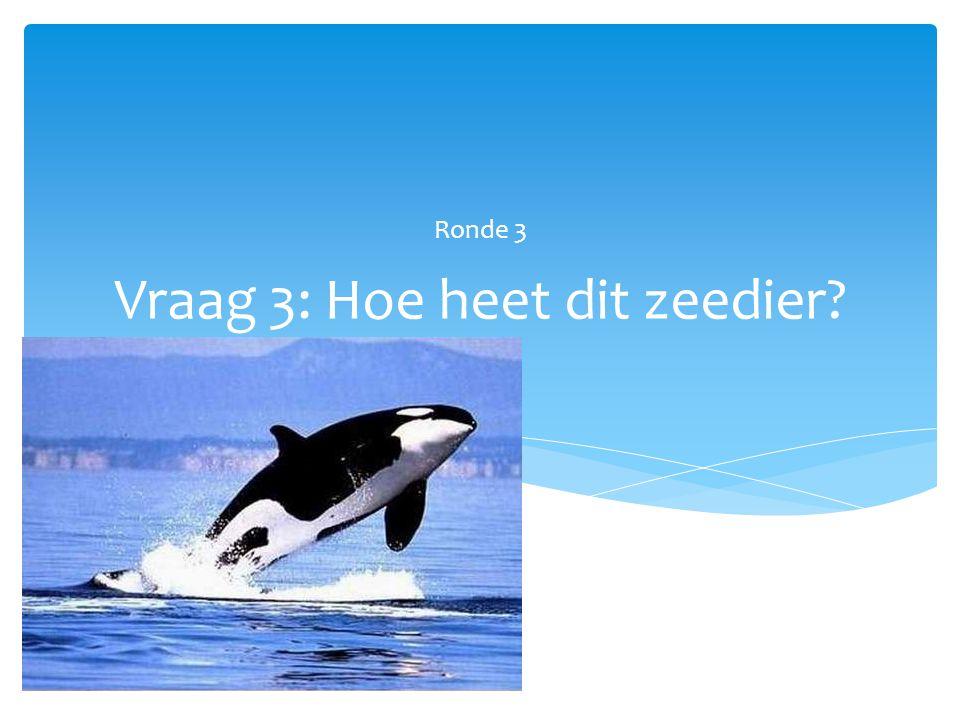 Vraag 3: Hoe heet dit zeedier