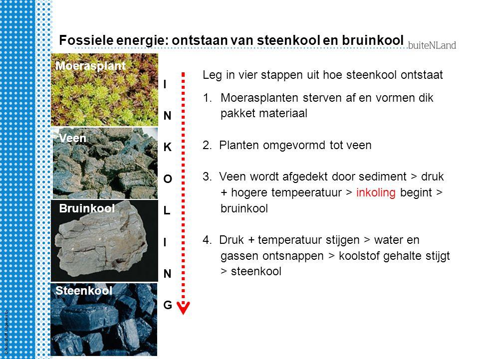 Fossiele energie: ontstaan van steenkool en bruinkool