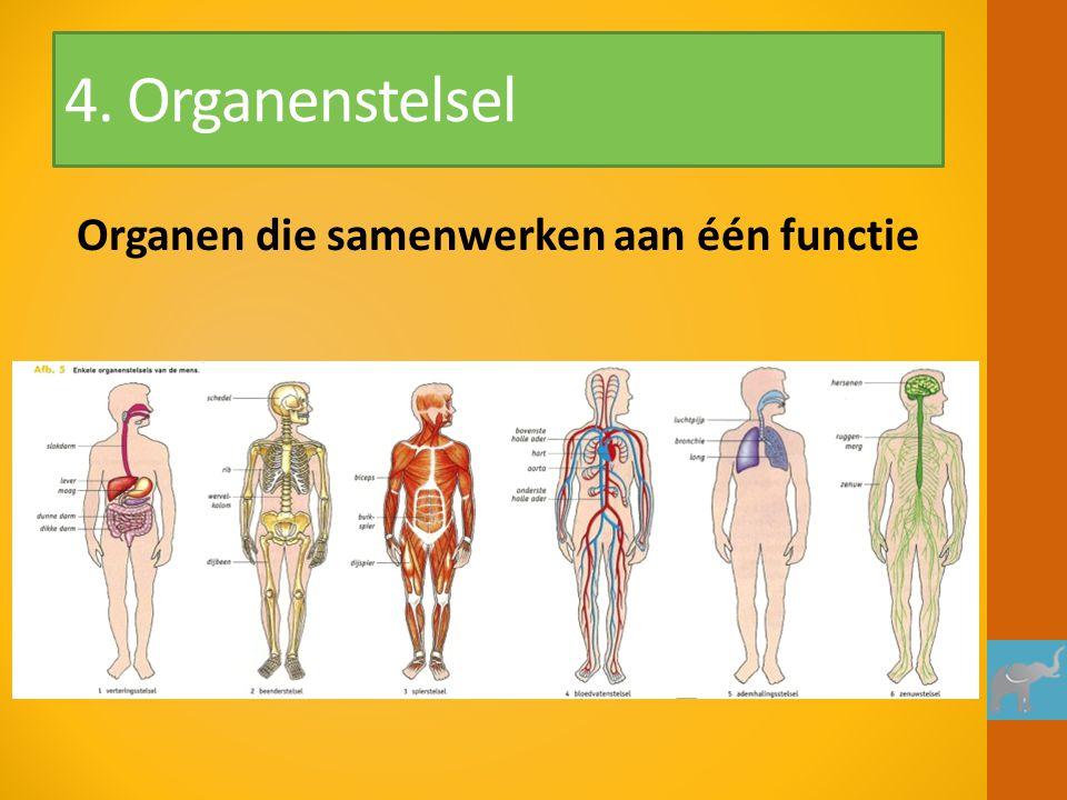 Organen die samenwerken aan één functie