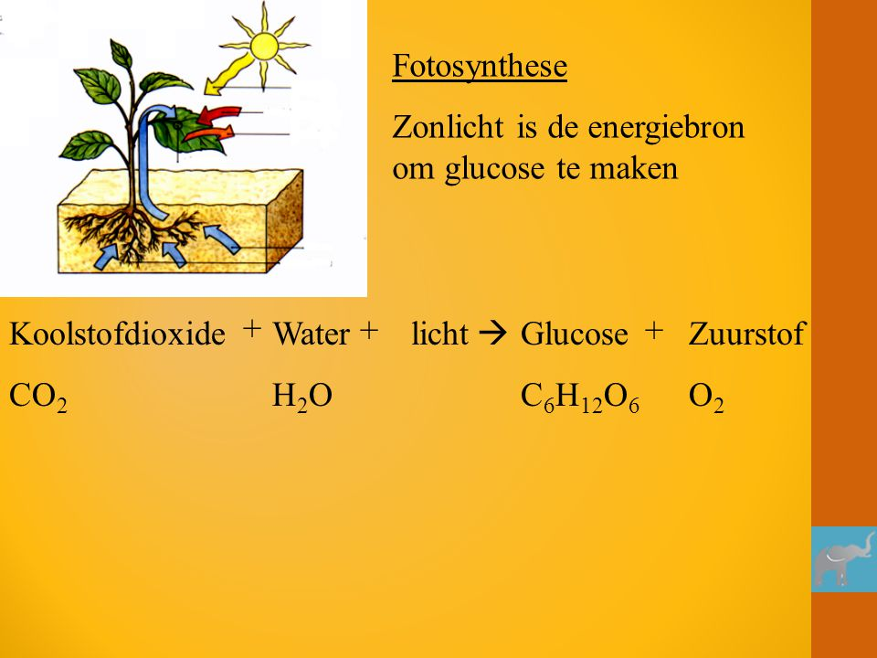 Fotosynthese Zonlicht is de energiebron om glucose te maken. Koolstofdioxide. CO2. + Water. H2O.