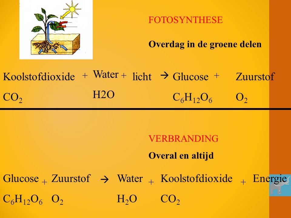 Water H2O Koolstofdioxide CO2 licht Glucose C6H12O6 Zuurstof O2