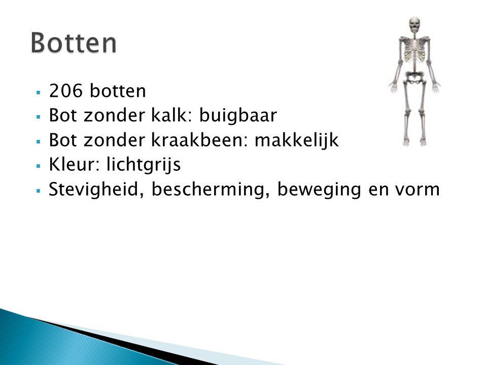 Botten 206 botten Bot zonder kalk: buigbaar