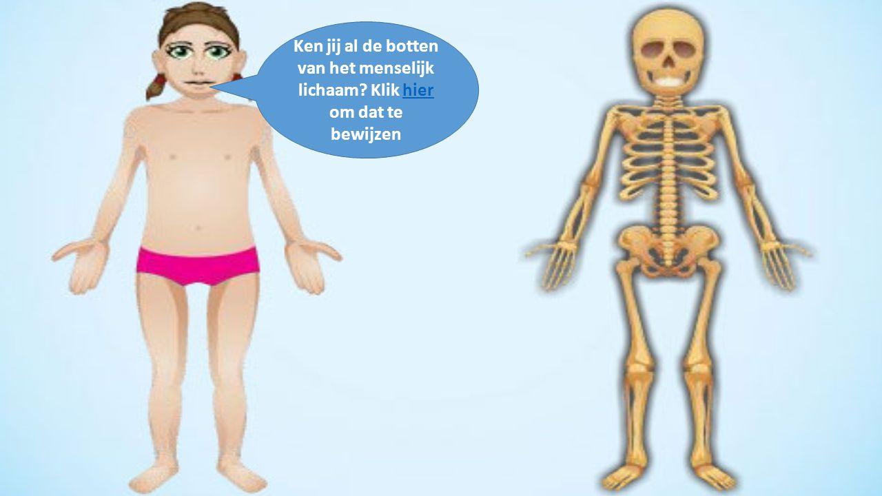 Ken jij al de botten van het menselijk lichaam