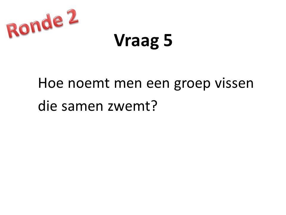 Ronde 2 Vraag 5 Hoe noemt men een groep vissen die samen zwemt