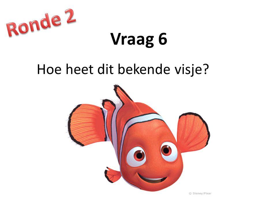Ronde 2 Vraag 6 Hoe heet dit bekende visje