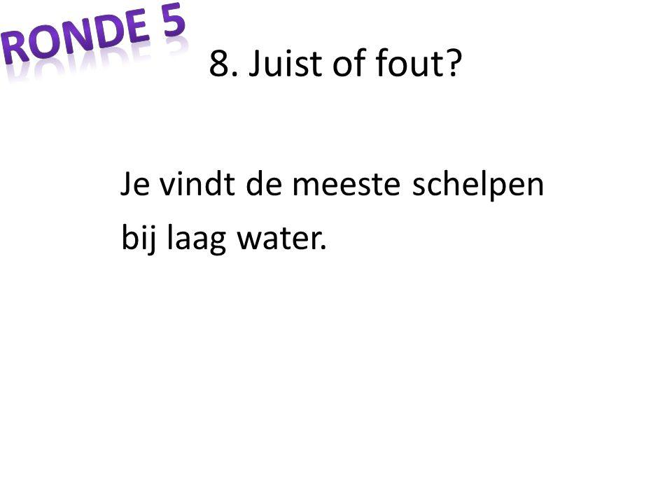 Ronde 5 8. Juist of fout Je vindt de meeste schelpen bij laag water.