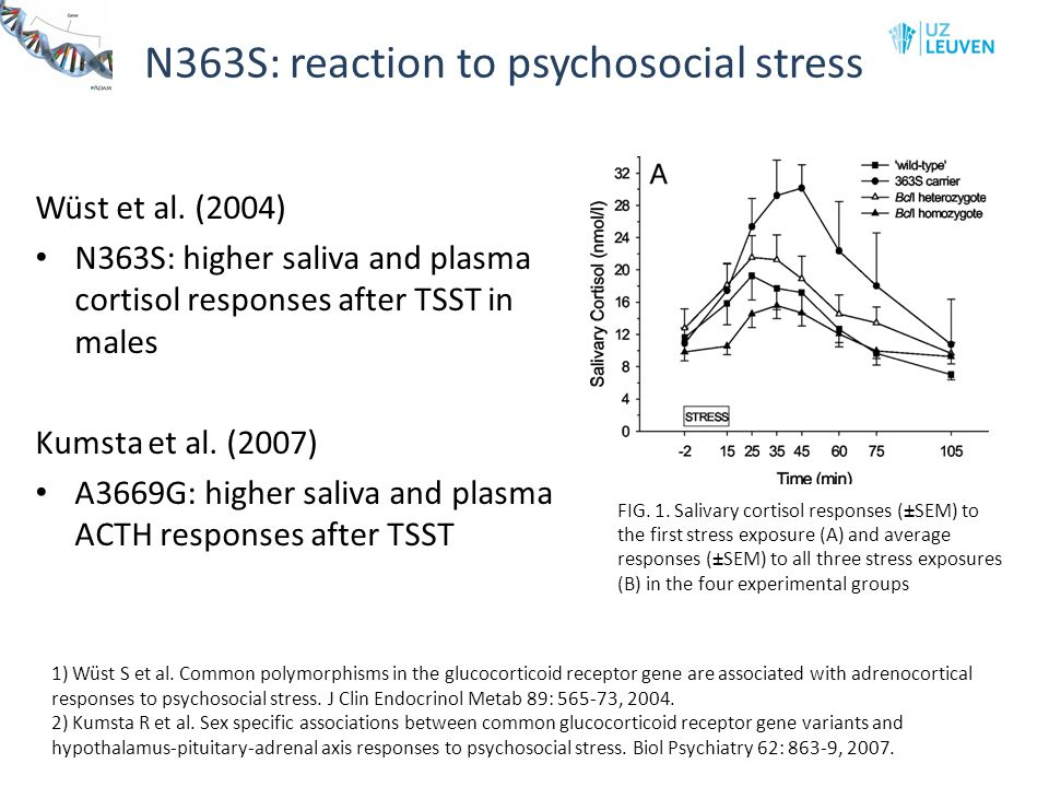 N363S: reaction to psychosocial stress