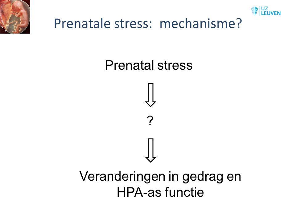 Prenatale stress: mechanisme
