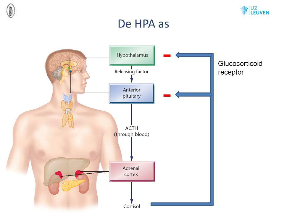 De HPA as - Glucocorticoid receptor