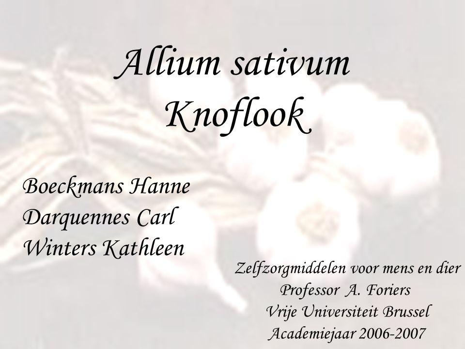 Allium sativum Knoflook Boeckmans Hanne Darquennes Carl