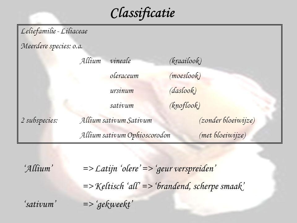 Classificatie 'Allium' => Latijn 'olere' => 'geur verspreiden'