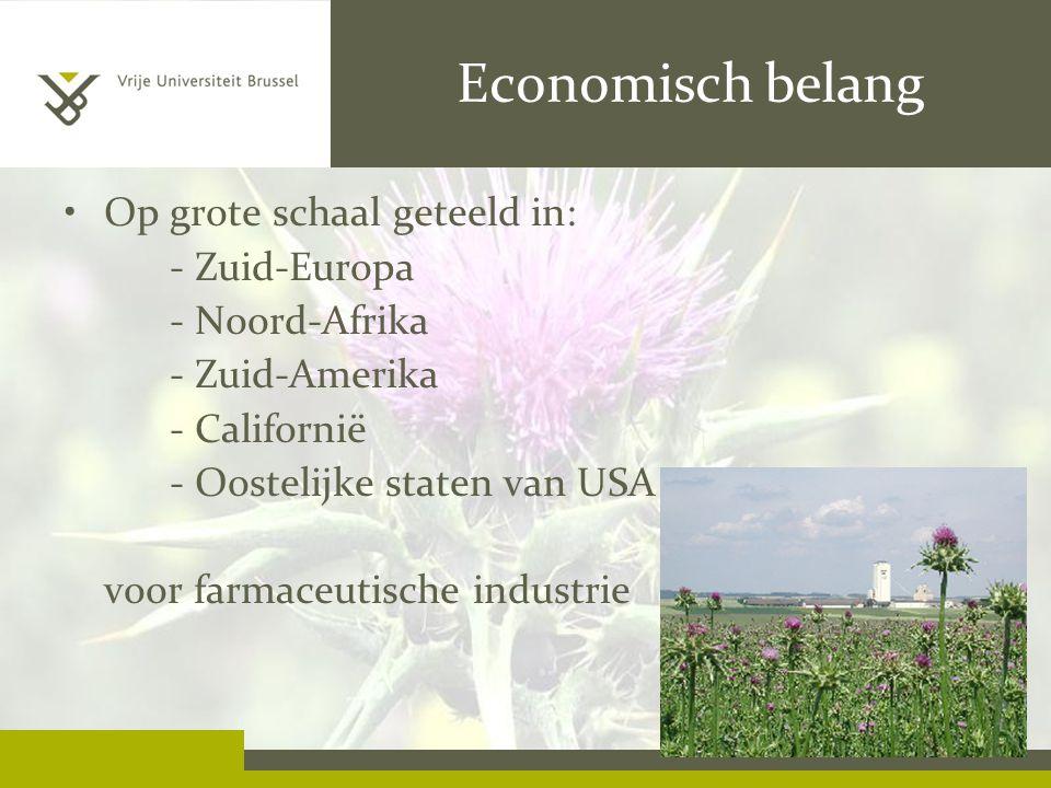 Economisch belang Op grote schaal geteeld in: - Zuid-Europa