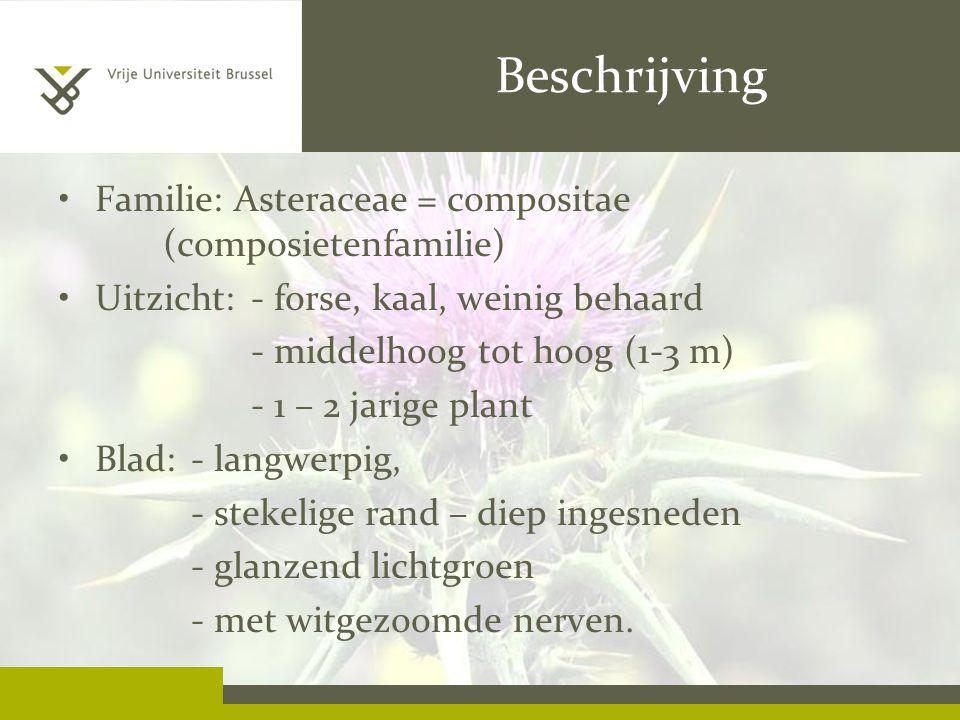 Beschrijving Familie: Asteraceae = compositae (composietenfamilie)