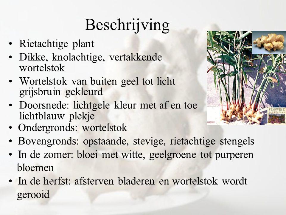 Beschrijving Rietachtige plant