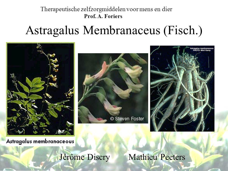 Astragalus Membranaceus (Fisch.)