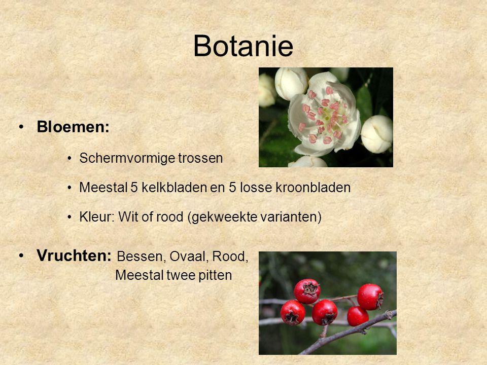 Botanie Bloemen: Vruchten: Bessen, Ovaal, Rood, Schermvormige trossen