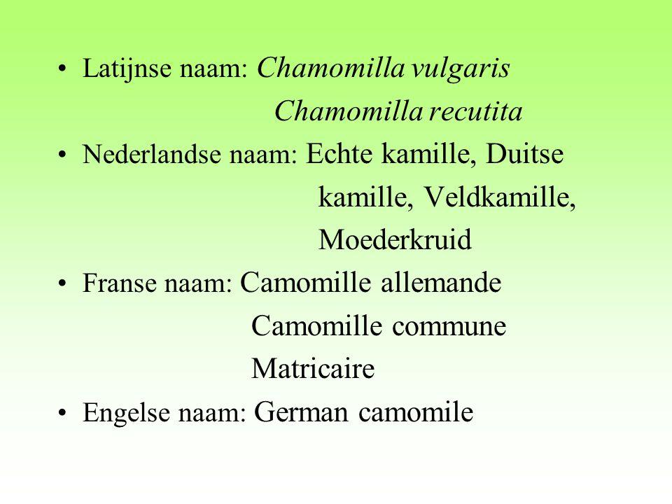 Chamomilla recutita kamille, Veldkamille, Moederkruid
